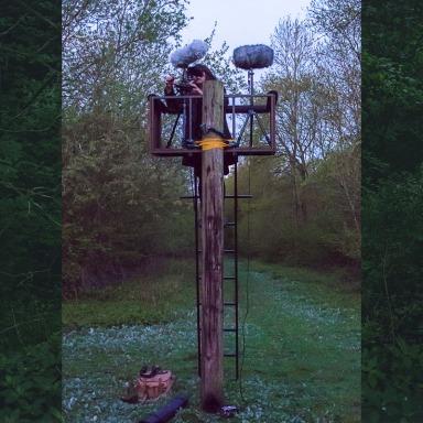 Juno Doran, Potton Wood, image by Richard Youell, May 2015