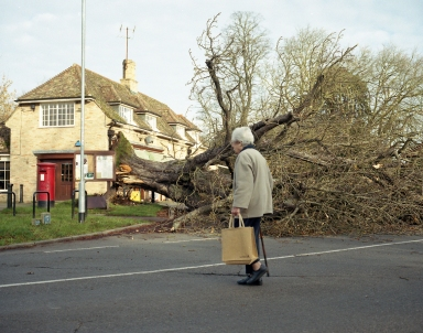 Fallen tree in Barton, Cambridgeshire