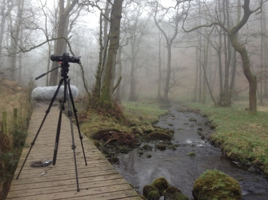 Camera setup for filming, Grizedale Woods, 2015